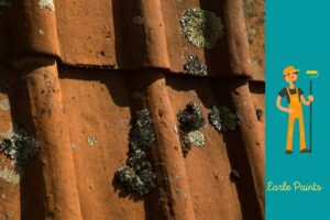 how to Remove Lichen From Colorbond Roof